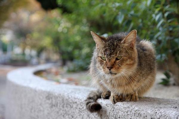 日曜日のネコたちへ。その1 サビ