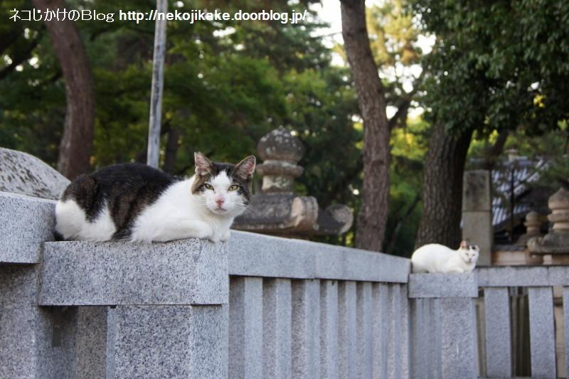 2016062322猫サイズ。