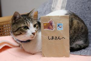 Love Letter From…シマ1