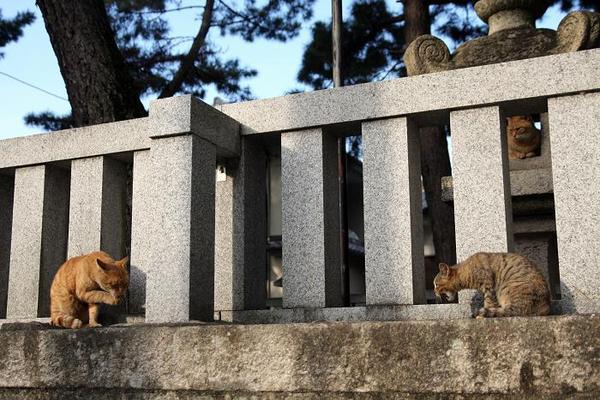 愛情。その1 キジトラ子ネコ、茶トラ、キジトラ子ネコのお母さん