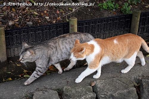 猫の行進。
