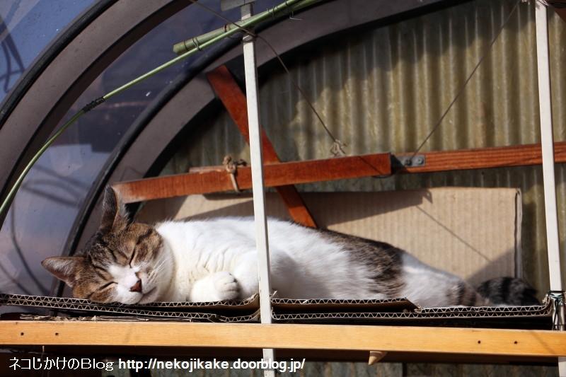 2017011101寝てる猫。