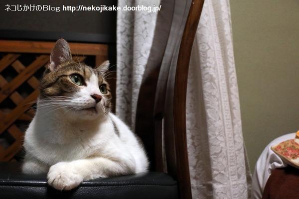 2016090304世界ネコ歩きとネコ。3