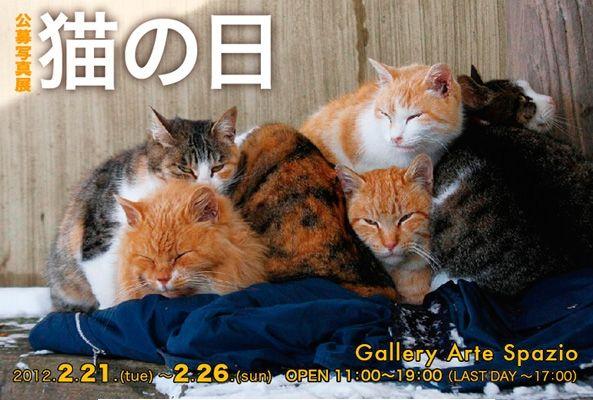 公募写真展「猫の日」DM1
