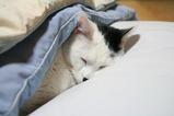 やっぱり寝る。クロ