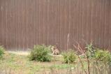 雨降りネコさん。その2