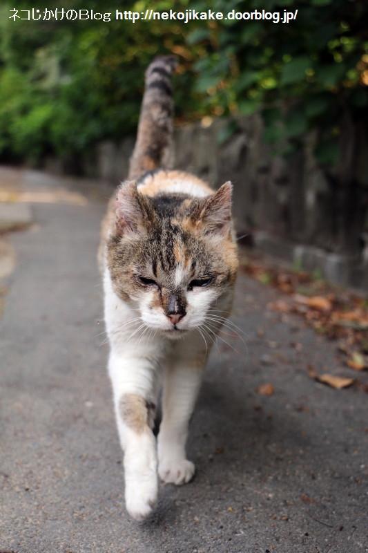 2018050525歩く猫。1