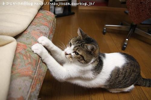 爪を研ぐもの。