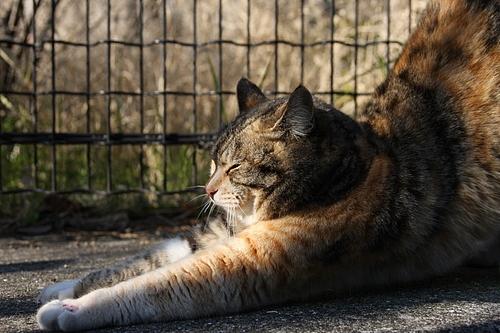 ネコのポーズ。