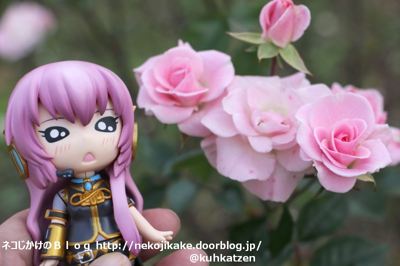 2020013006ピンクのバラを君に。