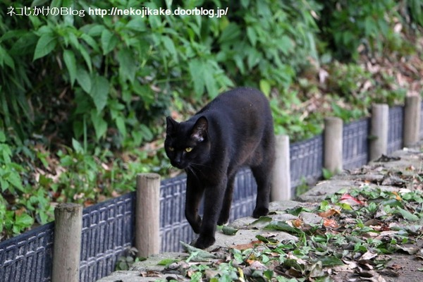 2016070519黒ネコのマーチ。2