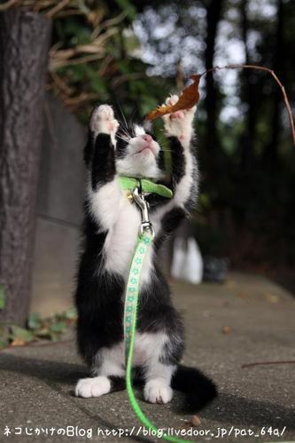 やっぱり・・・子ネコが好き。その2 ぴーこちゃん