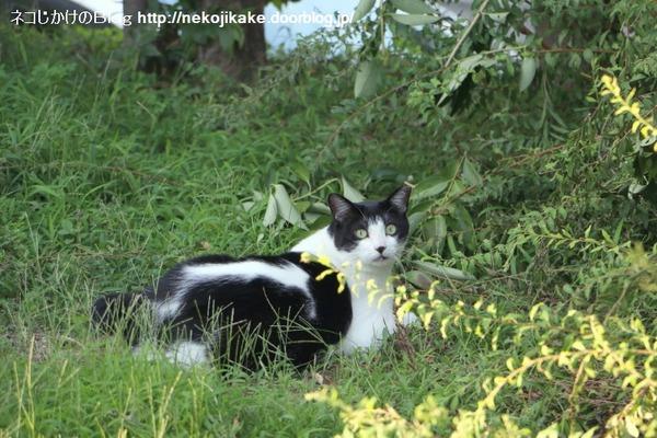 2016071808夕涼みの猫たち。5
