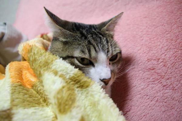 寒くなりました。シマ1