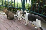 ネコたちは元気だ。その2