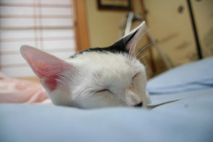 また寝る寝る。クロ