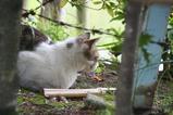 池のそばのネコたち。その1