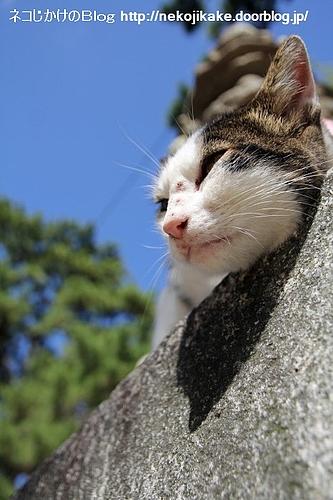 青い空、キジ白のネコ。
