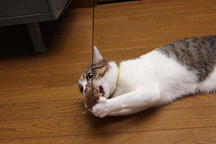 ネズミとネコ。シマ4