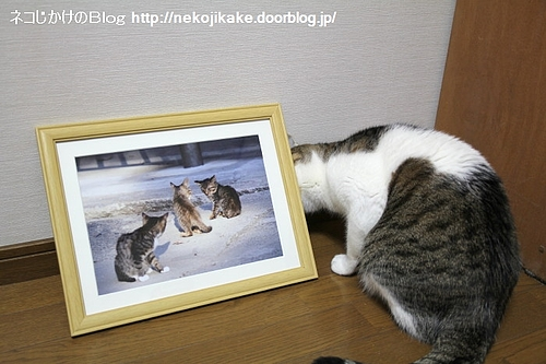 町猫2011@ギャラリーマゴット 作品3