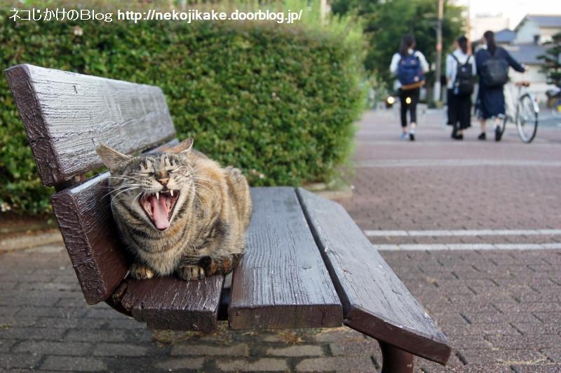 2016062323ベンチで休む猫。