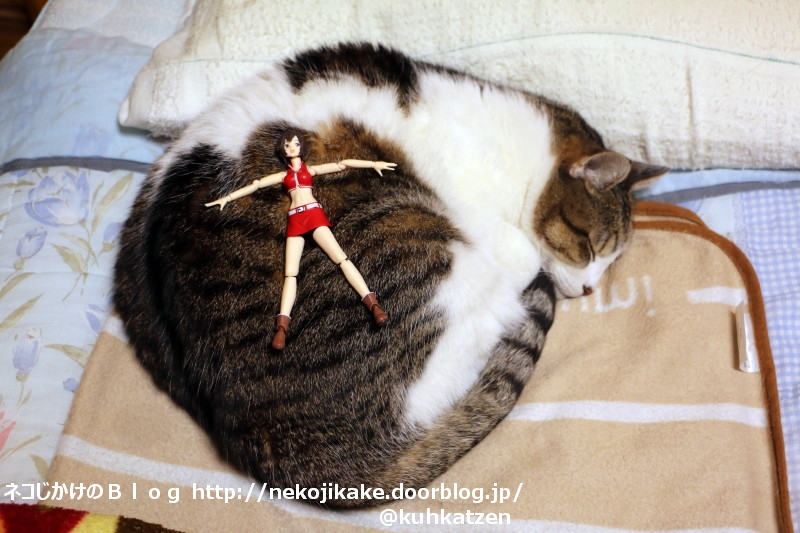 2020050804寝ている猫で遊ばないで。3