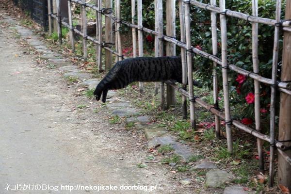 2017010115行く猫来る猫。4