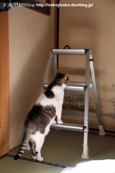 2014022601猫が立つ。
