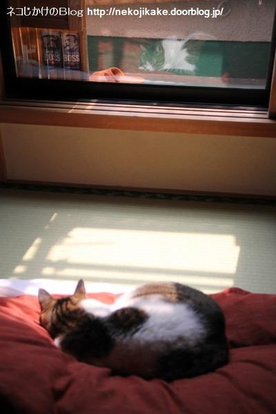 2014041701眠る猫。