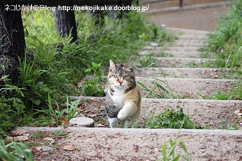 階段を駆け上る。