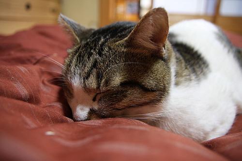 何だかとても眠いんだ。