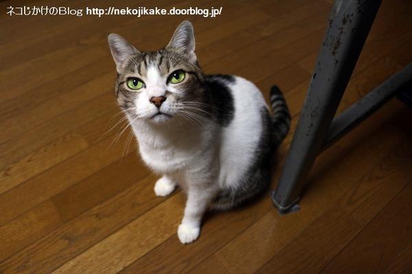 2016091003猫目線。2