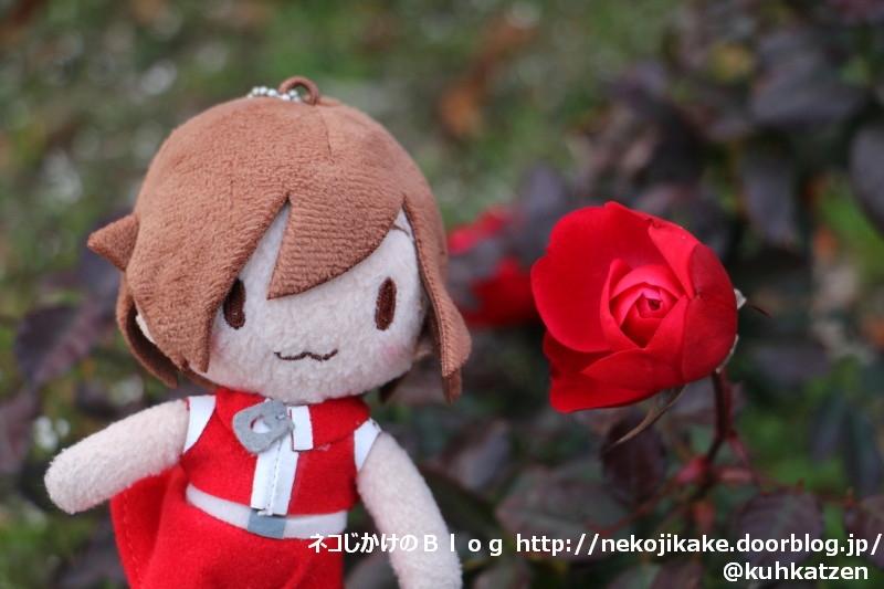 2020010305真っ赤なバラを君に。