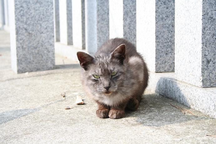 もはや黒ネコではない。