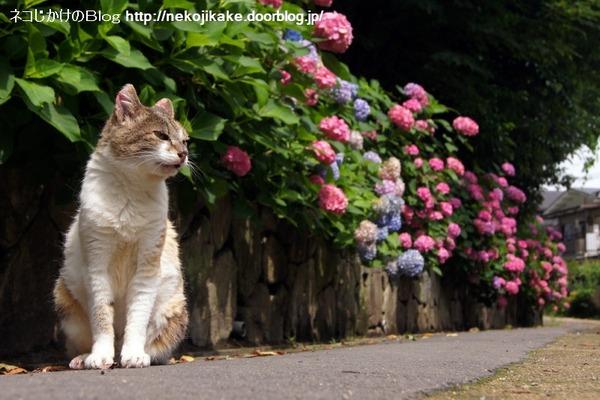 2016062215花に猫を添える。3