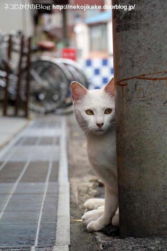 2015050701待ち猫。1