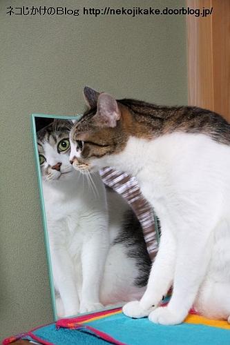 鏡よ鏡・・・。