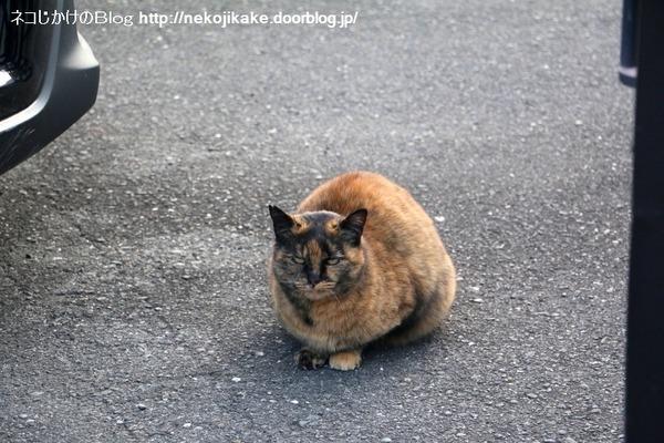 2017011712猫の態度。3