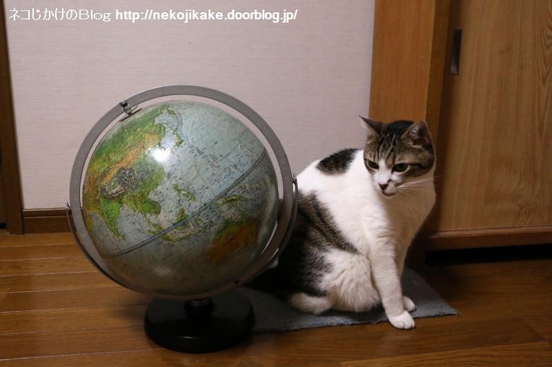 2017062101猫型宇宙人。1
