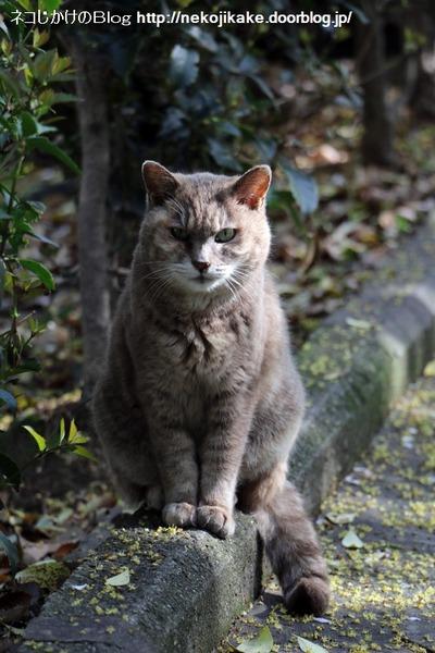 2016041406鳴く猫。3