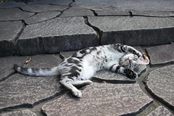 クークーだってネコである・・・。その3 クークー