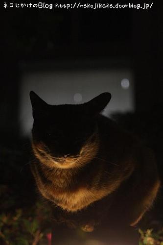 暗闇の仮面をかぶって。