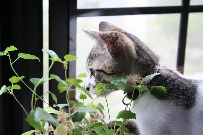 ネコたちの撮影会。シマ