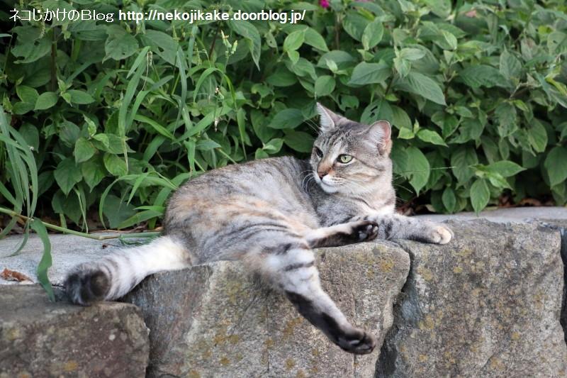 2015082408この世の中に猫の居場所がないわけがない。4