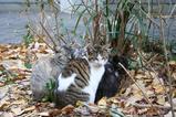 2005年、お世話になったネコたち。神社ネコたち