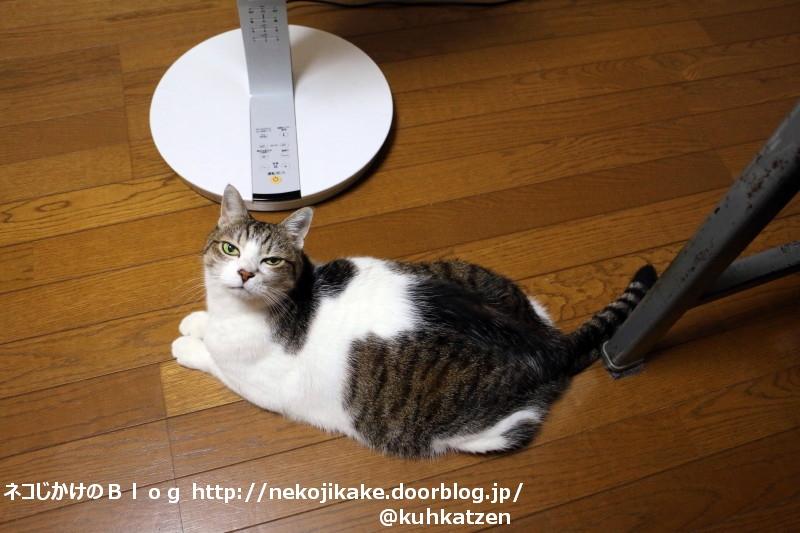 2020071702見上げる猫。2