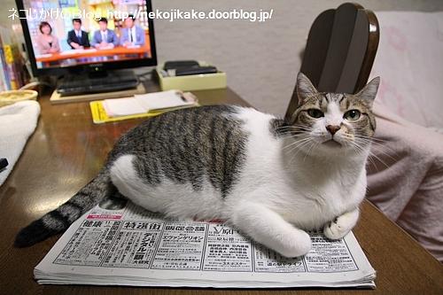 新聞の方が好きです。