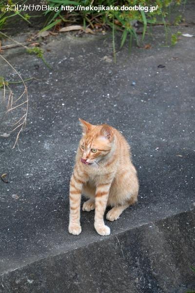 2016070609川沿いでくつろぐ猫たち。4