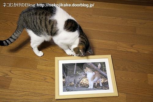 町猫2011@ギャラリーマゴット 作品4