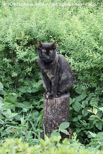 木彫りの猫ではありません。